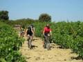 Ruta bici viñedos Rioja Alavesa