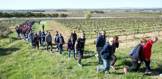 Marxa entre vinyes festival Vivid