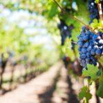 Bodegas Familiares considera competencia desleal Viñedos de Álava