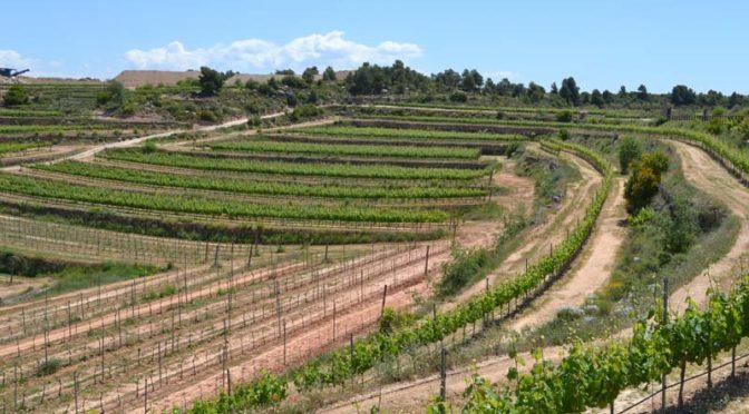 Las DO de vinos de Catalunya y sus variedades de uva